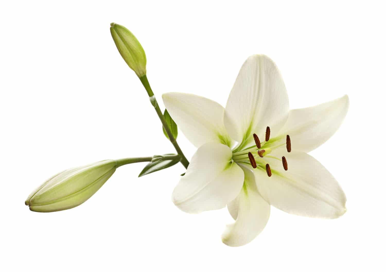 Fleur de Lys La Cuisine d'Isalys