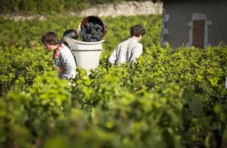 Partenaire Les Vignerons de Buxy